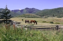 52051_intro_Horse-Ranch